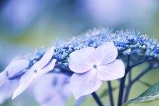 flower836