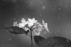 flower837-3