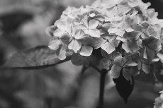flower838-3