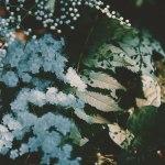 【高解像度】木陰に咲く庭七竈(ニワナナカマド)(3パターン)