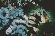 flower840