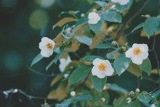 flower841