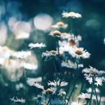 【高解像度】光を目指す花(3パターン)