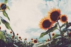 flower884-2