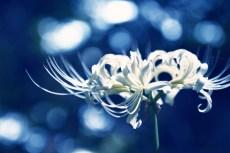 flower890