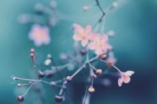 flower907
