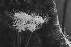 flower913-3