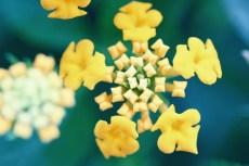flower916