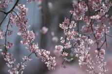 flower938-2