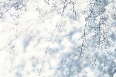 flower951