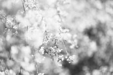 flower1008-3