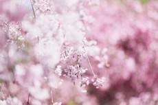 flower1008