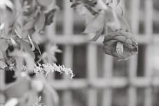 flower959-3