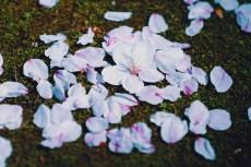 flower972