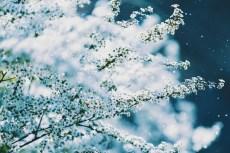 flower974