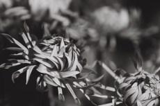 flower975-3