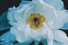 flower976