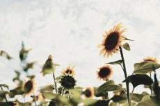 flower981-2