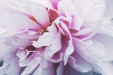 flower997-2