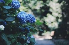 flower1033