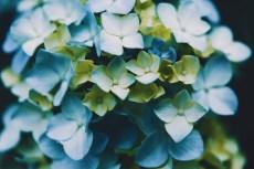 flower1041