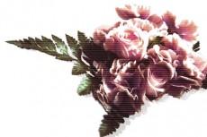 flower007
