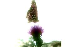 flower145