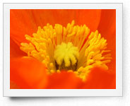 peper-curl-flower004