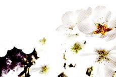flower020