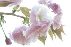 flower238