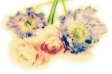 flower276