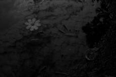 flower295