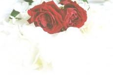 flower308