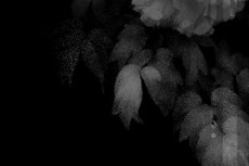 norepeat-flower056_4