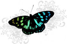 norepeat-butterfly010_3
