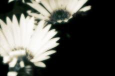 flower223_2