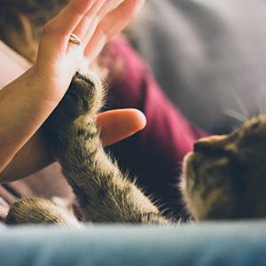 Soins dermatologiques pour chat