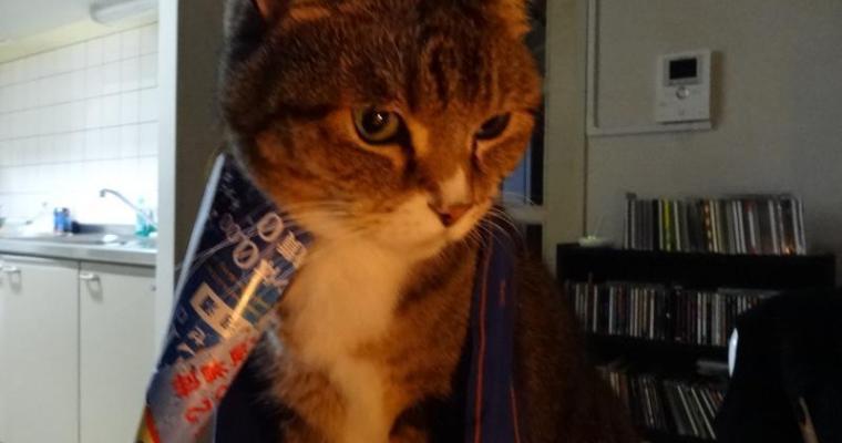 愛猫の誕生日をしましたヽ(=´▽`=)ノ