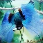 f94c0 paradijsvogel4 - Paradijsvogels