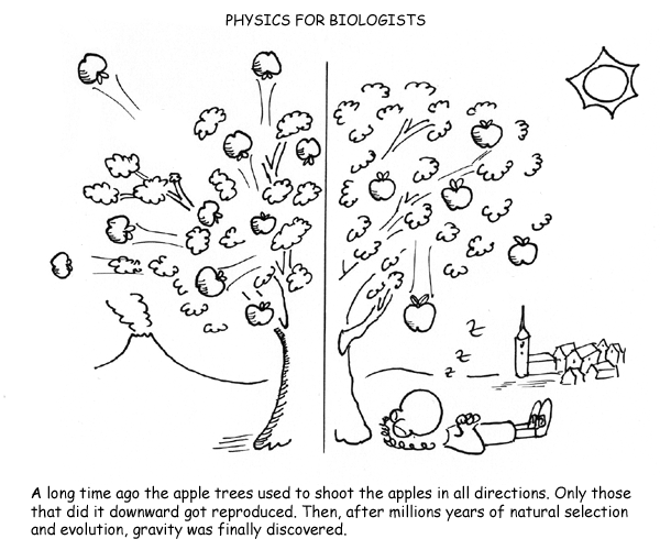 Hace mucho tiempo los arboles de manzanas solian tirar las manzanas en todas direcciones. Solo aquellas que lo hacian para abajo se reprodujeron. Luego de muchos años de evolucion y seleccion natural se descubrio la gravedad