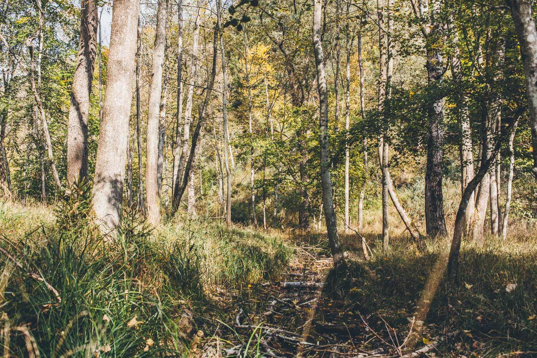 Wildpark Pössinger Au. Foto: Neoheimat