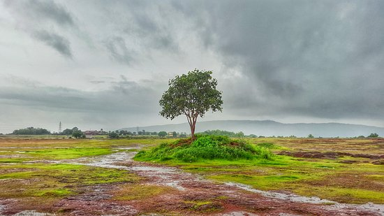 madayipara-complete-travel-guide-tree