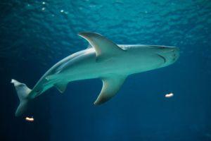 Tele van a víz cápákkal Izrael partjainál