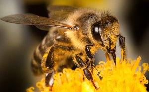 Méhek szemeit modellezve fejlesztenek önvezérlésű autókat Izraelben