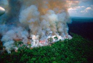 Izraeli segítség Amazóniának
