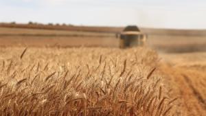 Izrael ötmillió dollár értékben küld gabonát Szudánba