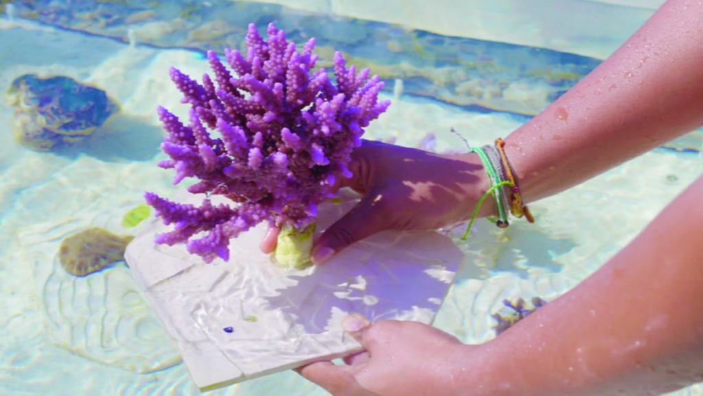 NEOM and (KAUST) announced Shushah Island Coral Reefscape 1