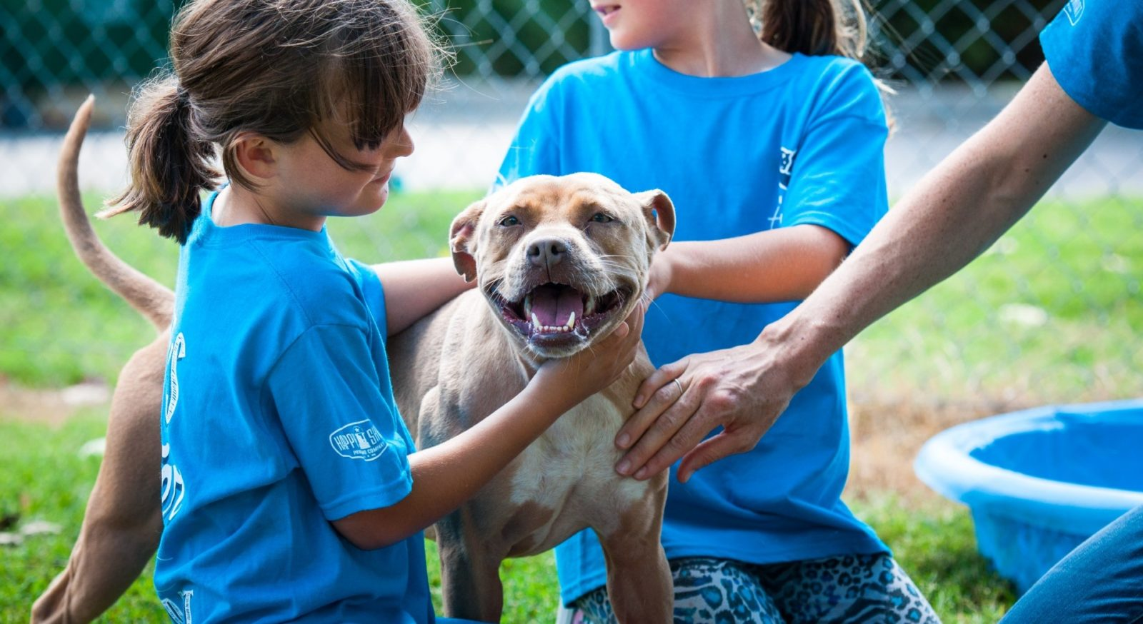 A dog being pet by animal shelter volunteers