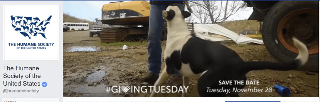 Humane Society GivingTuesday nonprofit social media example