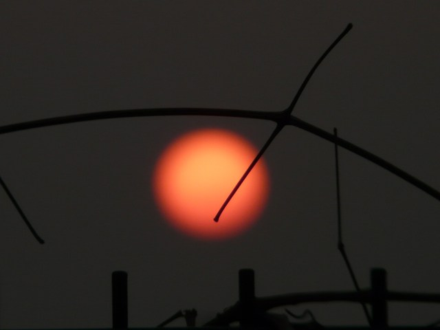 sun-55517